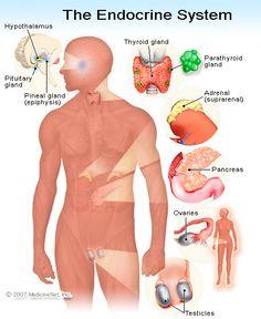 endocrine-disorders